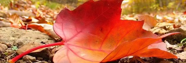 10 herfsttips die u niet wilt missen
